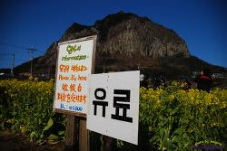 천원짜리 유채밭 입장료의 불편한 진실