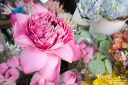 ▩홍콩 여행기▩ 세상천지 꽃은 이곳에 다 모였네. 몽콕 꽃시장/플라워 마켓(flower market)