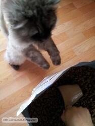 로얄캐닌 인도어 10kg 구입 후기 실내 고양이를 위한 사료 바꿔보니