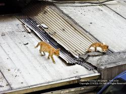 양철 지붕위의 고양이
