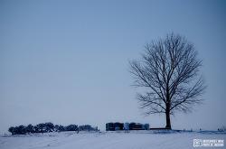 겨울 안성목장 (도심지에서 찾은 이국적인 들판)