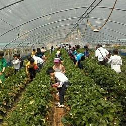 푸르미 딸기농장을 소개합니다