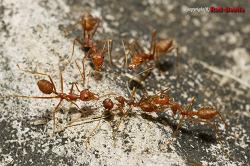 [외국곤충] 심각한 집단구타