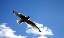알바트로스(Albatros)에 대한 단상-1994년 대학 동아리 소식지에 기고한 글