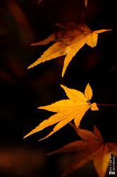 가을, 단풍 그리고 바람