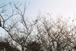 Winter, Wood, Bird