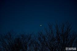 달, 밤, 나무