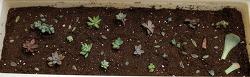 우리집 다육 식물들