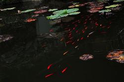 발자국 소리를 알아듣는 물고기