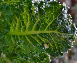 두뇌에 좋은 채소가 있다면?