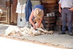호주 드림월드 환상의 양털깎이 쇼 : 버라이어티한 쇼를 직접 체험하세요!