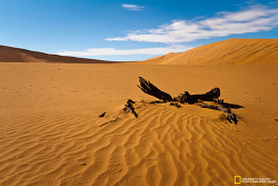 '사막'은..