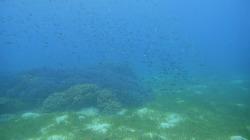 필리핀 발리카삭 다이빙 투어 3 - Black Forest