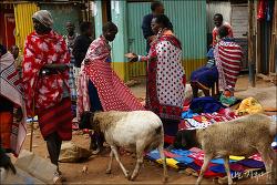 [탄자니아] 노마드 마사이족이 도시로 간 까닭은?