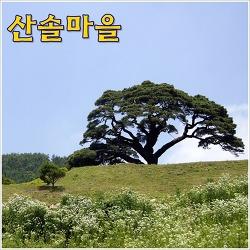 [영월농촌체험마을] 산솔마을 - 솔바람 솔솔~ 솔향기와 인심이 넘쳐나는 마을