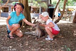 호주 골드코스트 드림월드 : 캥거루 & 코알라와의 만남