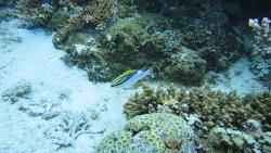 필리핀 발리카삭 다이빙 투어 2 - Diver's Heaven