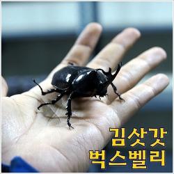 [영월농촌체험농장] 김삿갓 벅스밸리 - 모여라, 곤충친구들!