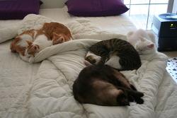 꿈잠 잘 수 있는 침대의 조건