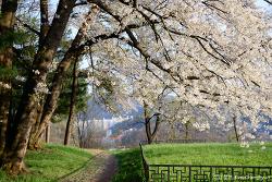 공주 여행 : 봄은 아직 안녕이라 인사하기에 이르다.