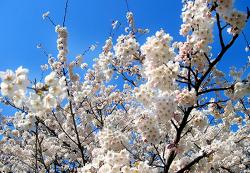 봄나들이 나가기 좋은날에도 미세먼지걱정ㅠㅠ