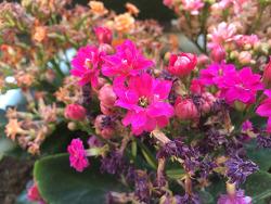 [사진] 선인장 꽃