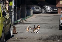 #141 길고양이 가족의 나들이