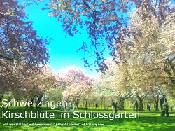 흔하지 않은 독일의 벚꽃놀이