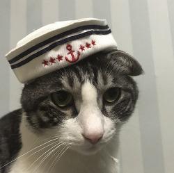 8월, 세상 귀여운 마린 고양이