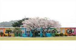 벚꽃에 취하는 더럭분교로 봄소풍 어떠세요?
