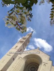 워싱턴 바실리카 국립 성당에 가다