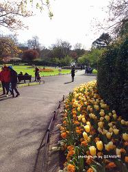 4월의 더블린 일상. 스티븐스 그린 공원(St.Stephen's Green Park)