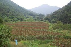 생산지 탐방_ 귀하디귀한 한살림 잡곡