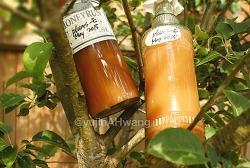 생꿀 매실 과일 발효법(매실자르기와 발효과정 비디오 포함)