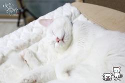 [반려동물] 벌써 겨울잠 자는건 아니지?