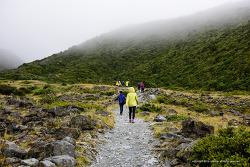 뉴질랜드 지질답사여행33 - 마운트 쿡 (3) 케아포인트 트레킹