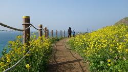 숨어있는 제주유채꽃명소, 노오란산책로 '함덕서우봉둘레길'