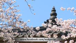 꽃피는 유달산 축제