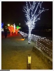 동양에서 가장 오래된 천문대 첨성대 야경 & 첨성대 주변 트리
