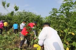 석화천 생태계교란 식물 퇴치 행사