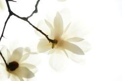 생각 없는 삶, 슬픈 봄날의 기록