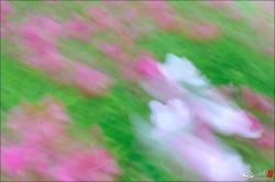 삼락이야기 : flower-#13