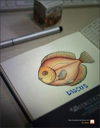 디스커스 (DISCUS) 물고기