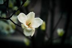 지나간 봄꽃 몇개...