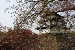 Day4 히로사키성 벚꽃