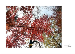 2017 가을풍경 - #4