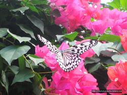 오키나와 3박4일 가족여행 셋째 날, 관광버스투어 - 류구조 나비원