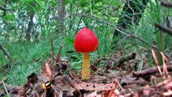 화려한 빨간색 버섯
