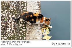 [적묘의 그라나다]알함브라에서 삼색고양이와 검은 고양이를 만나다.