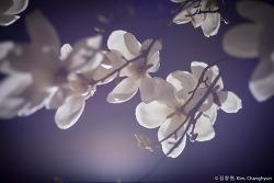 봄이 가고있다...